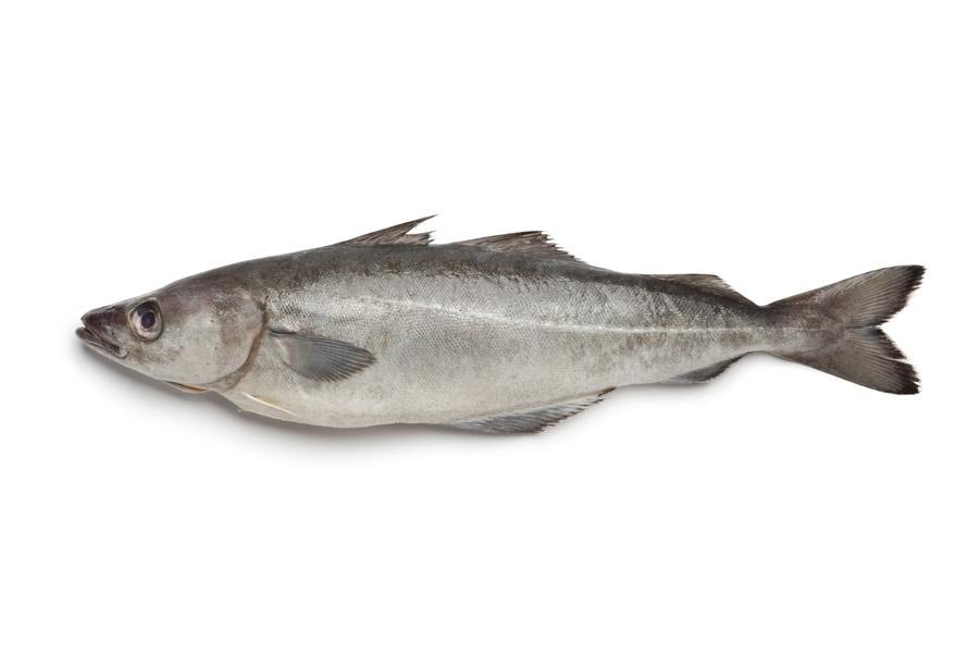 Фото рыба минтай